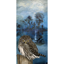 Kim Hollingsworth - Pygmy Owl