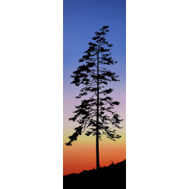 Kylee Turunen - Tree at Sunset